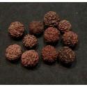 Rudraksha Seed from India