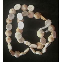 Shiva Eye shell Beads strand 49cm from India